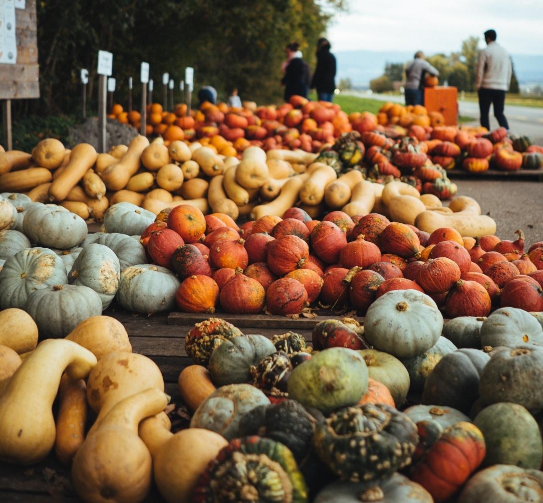 squash and pumpkin vegetable lot
